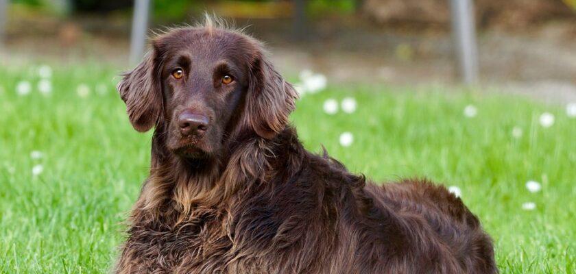 ¿Por qué se frota tu perro en la hierba?